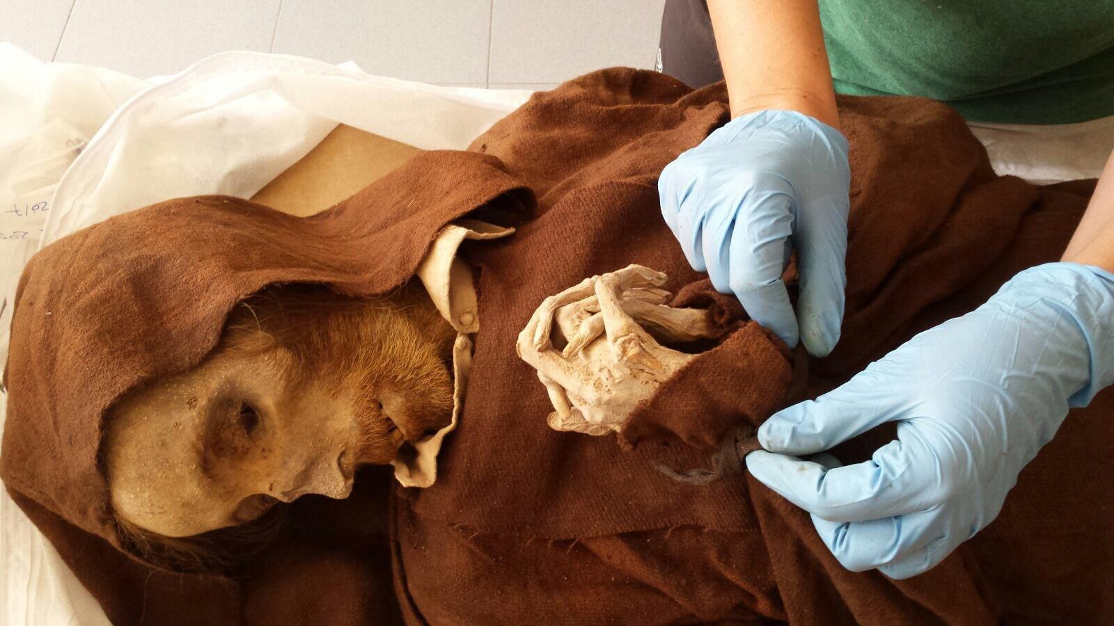 Музей мумий