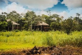 центр амазонской медицины