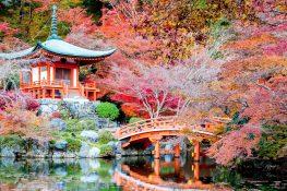 Япония тонкости этикета
